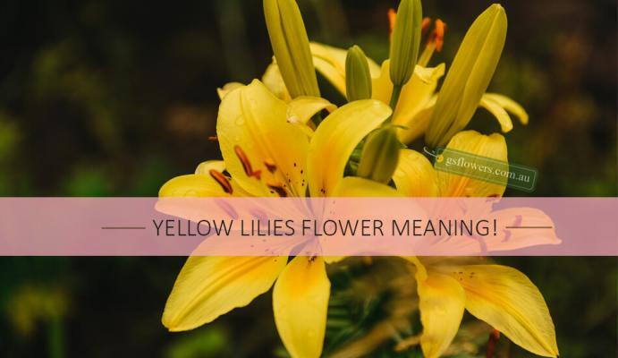 Yellow Lilies Flower Meaning - Lily