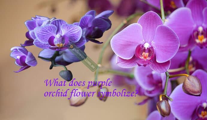 What does purple orchid flower symbolize? - Orchids
