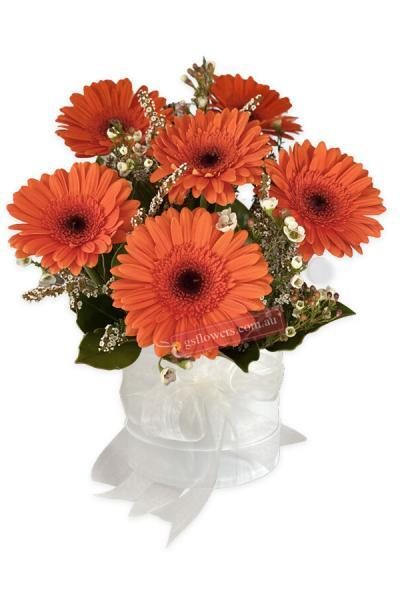 Vibrant Orange Fresh Gerbera Daisy Flowers - Flower